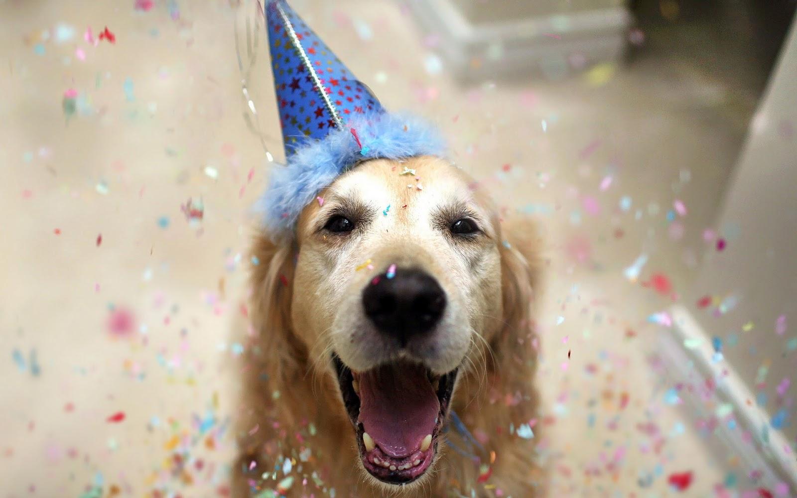 Foto van een hond met feestmuts op zijn kop | hd honden wallpaper