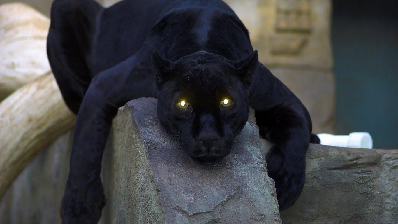 black panther wallpapers