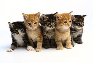 Melatih Anak Kucing