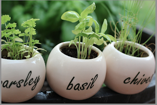 Home Gardening As A Hobby