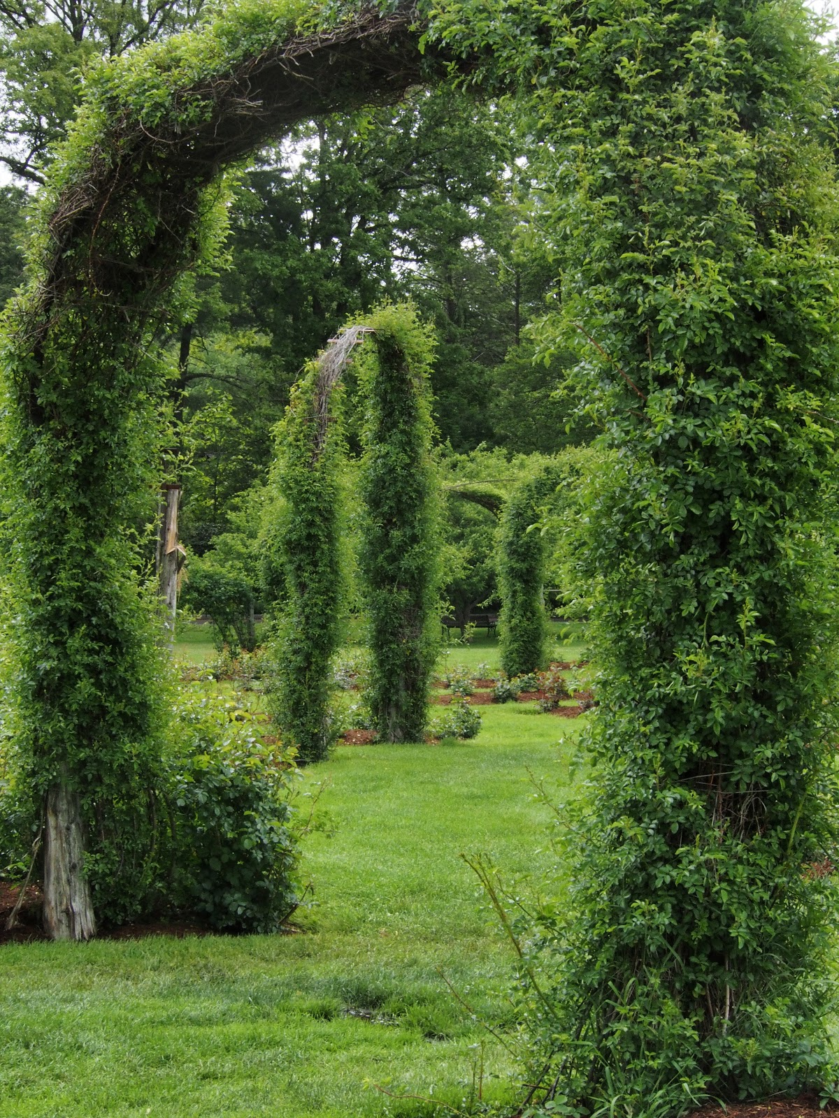 Into the Garden, #ElizabethPark #RoseGarden 2014