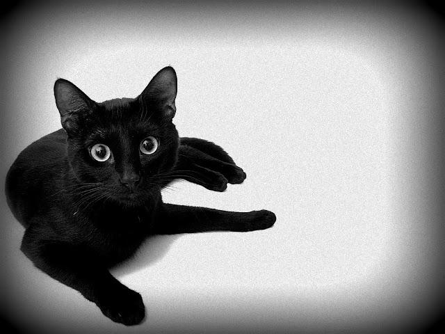 что значит черная кошка