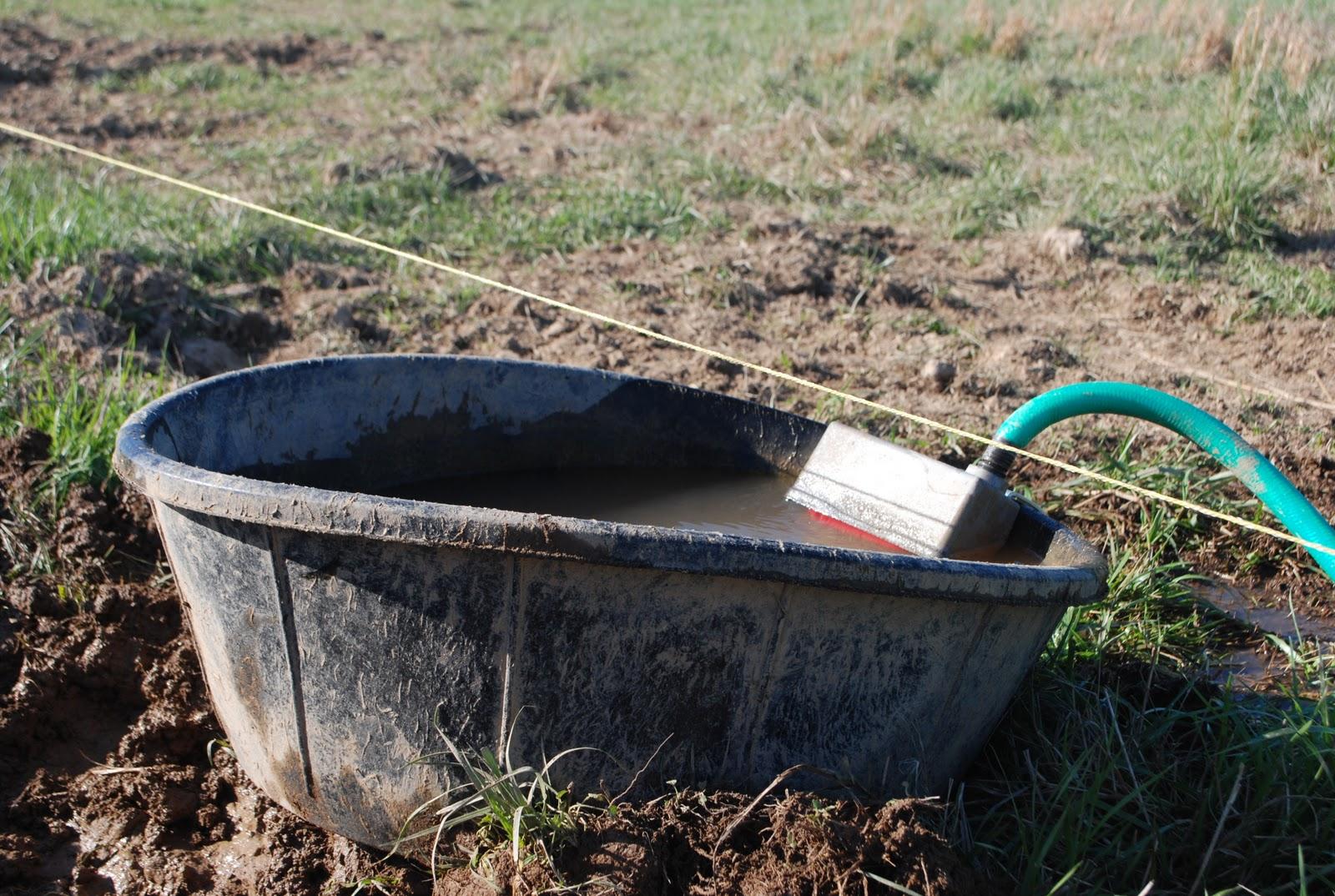 The Inside Dirt Life As A Farm Girl Pig