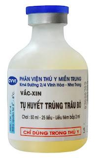 Một loại vaccin dùng cho heo