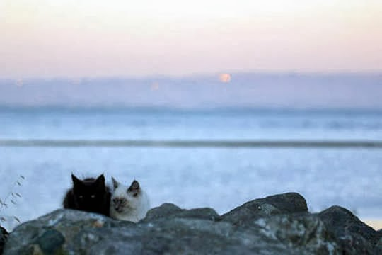 stray cats of san francisco bay area