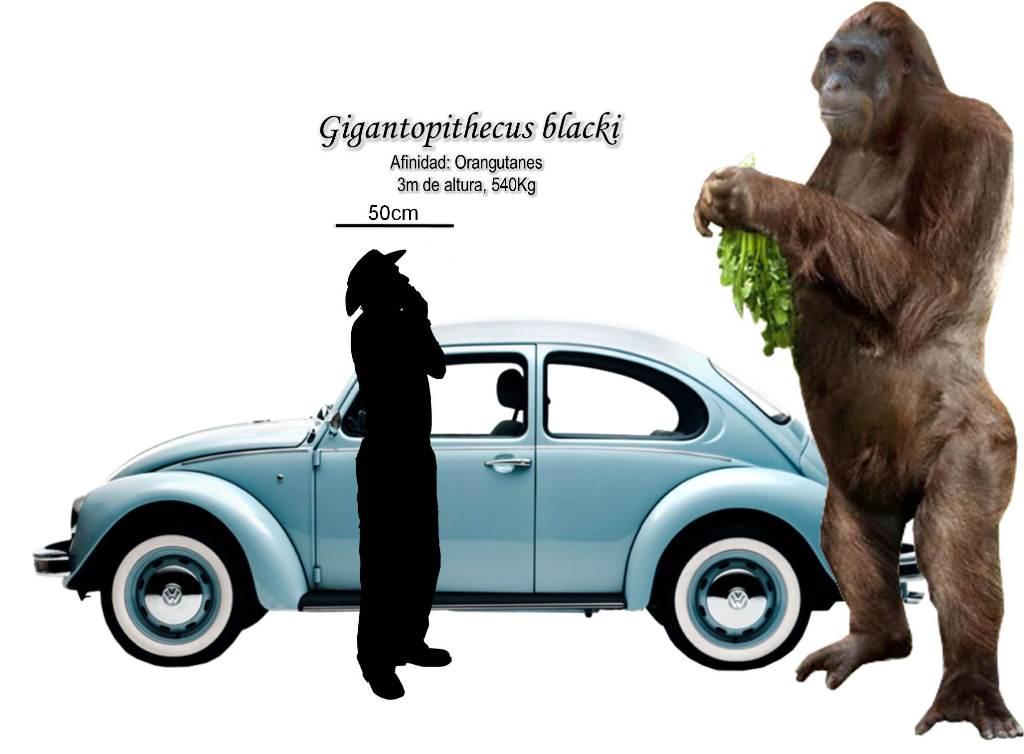 Gigantopithecus Giganteus Siendo gigantopithecusGigantopithecus Giganteus