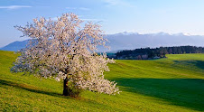 Jar v Turci