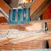 Termites Penrith