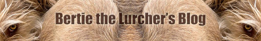 Bertie The Lurcher's Blog