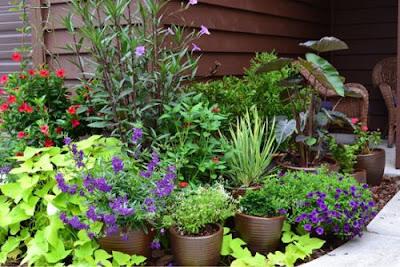 hortikultura - obat