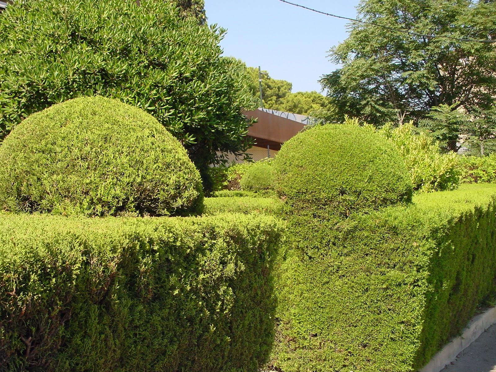 Jardineria eladio nonay jardiner a eladio nonay setos - Jardineria eladio nonay ...