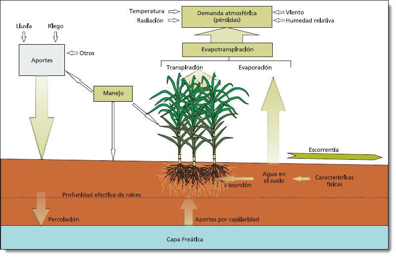 Avibert: Riego de la Caña de Azúcar Tecnología Azucarera