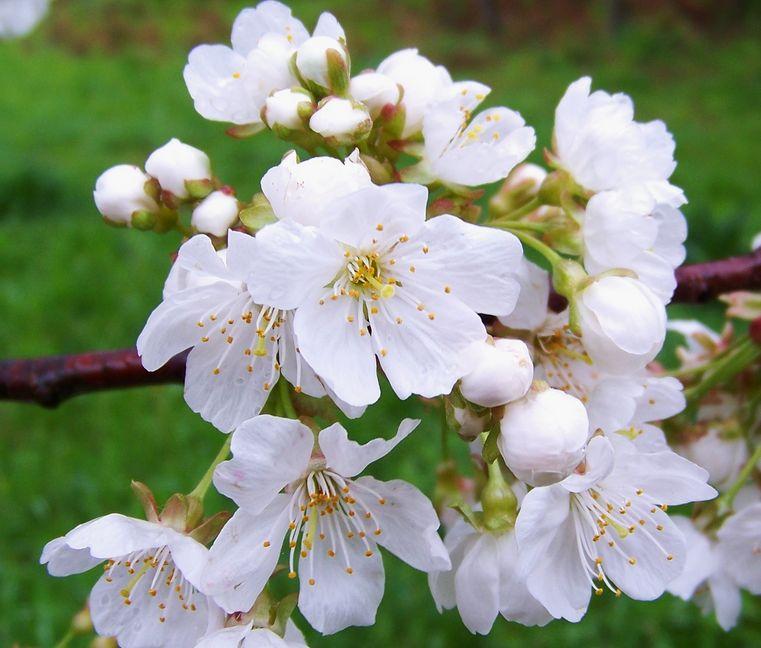 Fotos de flores blancas 20