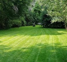 Pinstrosity Salted Lawns