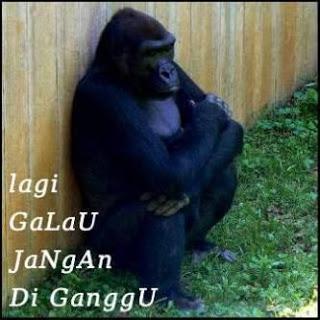 monyet-galau