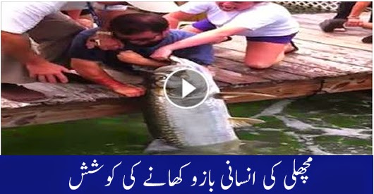 Fish Grabs Man's Hand Goes Viral