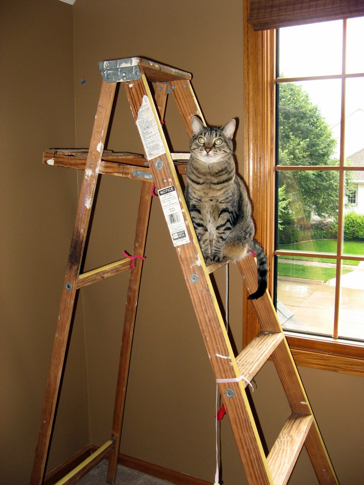 of cats and cardstock feline friday cheap cat tree