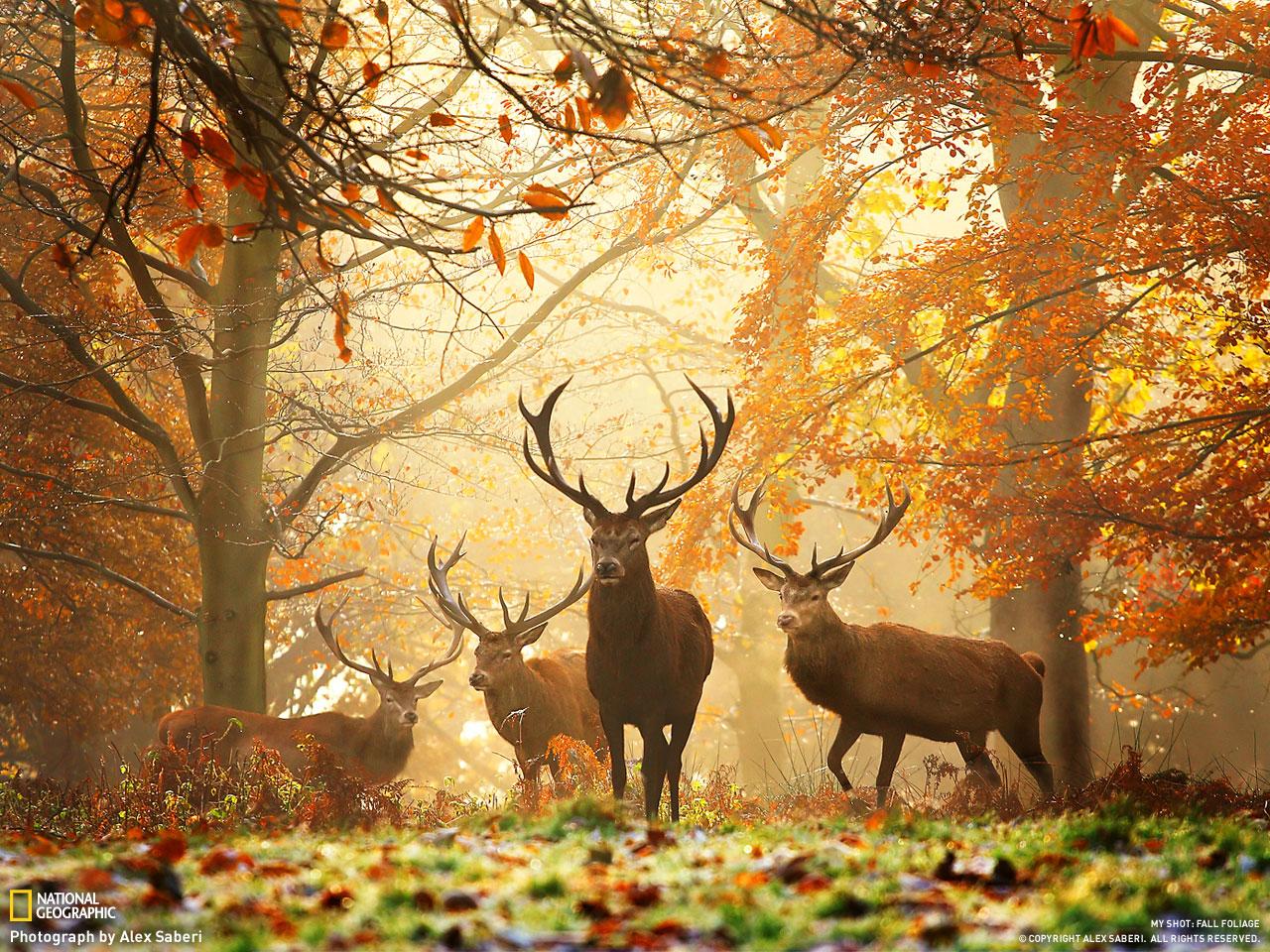 http://2.bp.blogspot.com/-9X2iwzbr5tE/TgYD4PW40QI/AAAAAAAAAUE/qwl6MMlPdwo/s1600/fall1.jpg