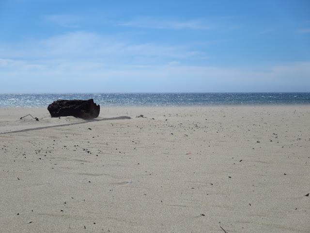 Scott Creek Beach California