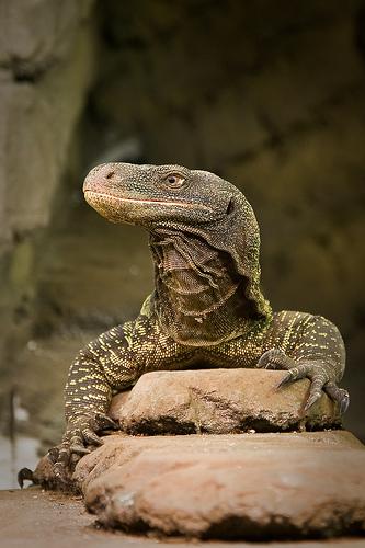 Los 10 animales más peligrosos del mundo Fotos Infobae