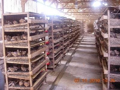 Beberapa Tips Beternak Burung Sebagai Pilihan Bisnis Sampingan