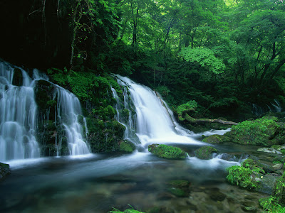 Cascada entre el bosque