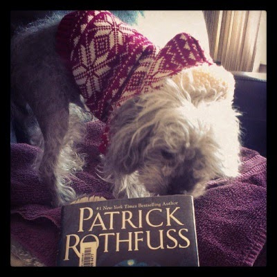 A fuzzy grey poodle, Murchie, sniffs the edge of a small blue hardcover with the author's name--Patrick Rothfuss--just visible inside the shot. Murchie wears a red and white fair isle sweater with a hood.