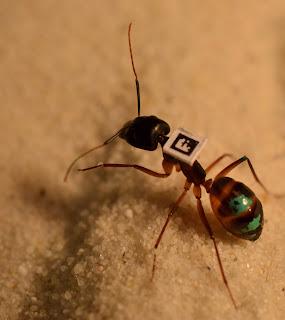 Hormiga identificada con código QR y color