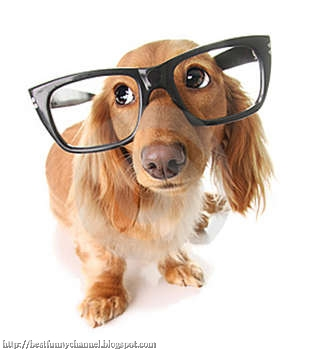 Funny dog in the glasses