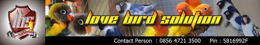 Love Bird Solusion