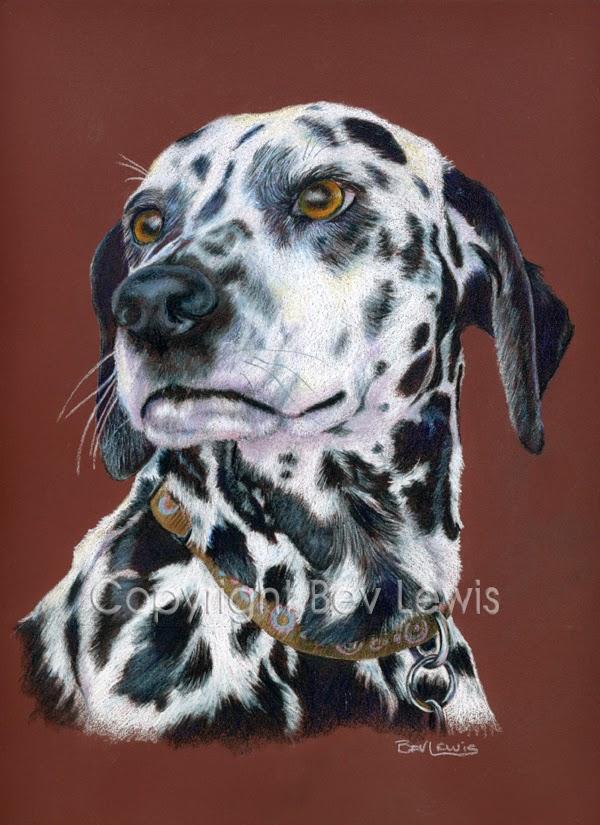 dalmation,dog