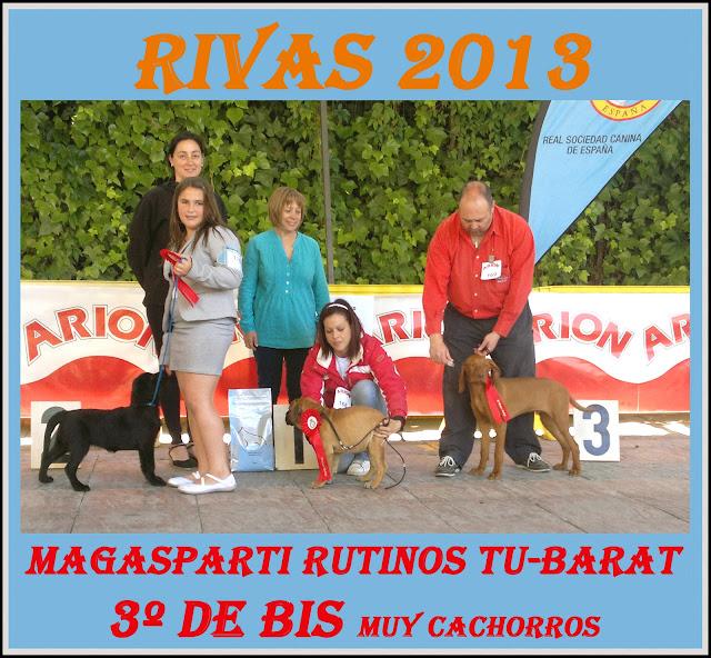 Concurso Nacional Canino Rivas Vaciamadrid. Podium BIS Baby