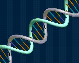Sindrome de Down, grandes licoes em um cromossomo pequenino