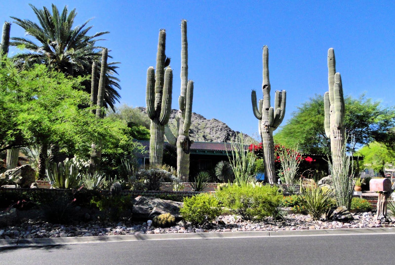Great Cactus Garden