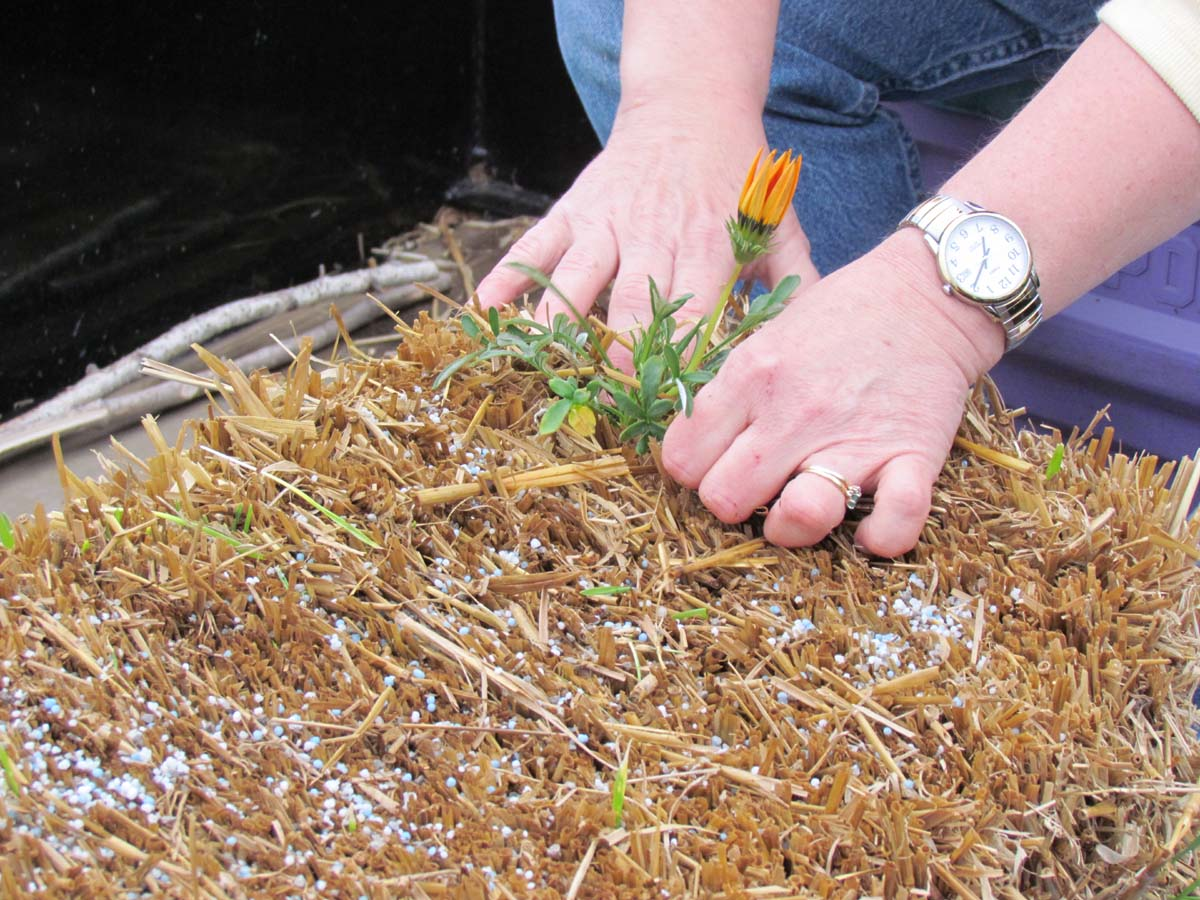 The Agatelady: Adventures and Events: Straw Bale Gardening