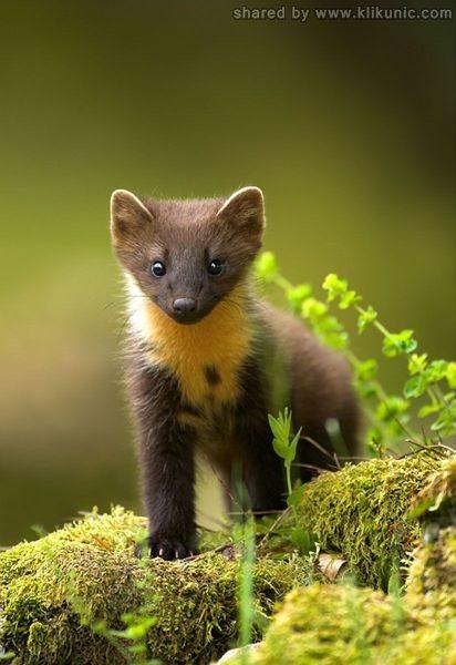 http://2.bp.blogspot.com/-9ZmRHouoJdc/TXzD0sQNWRI/AAAAAAAARDo/CEN4NpxojCY/s1600/these_funny_animals_635_640_15.jpg
