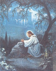 The Diary Of A Sower Learning About The Garden Of Gethsemane