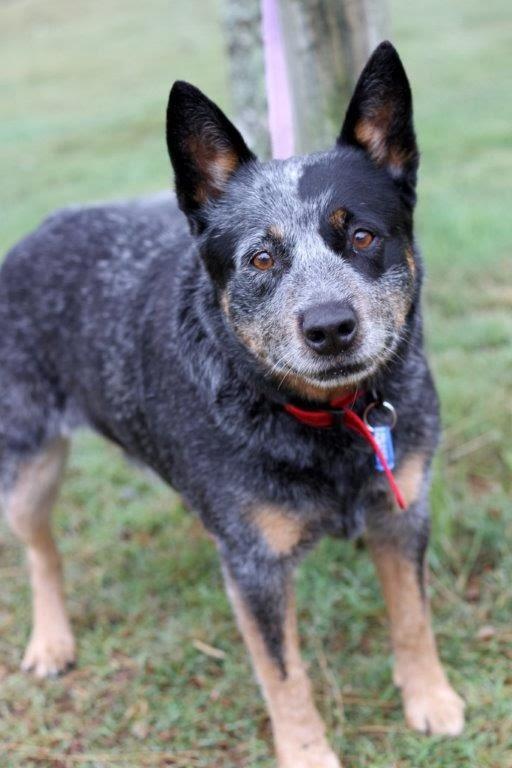 http://adoptapet.com.au/animal/animalDetails.asp?animalType=3&state=2&statusid=3&task=search&tpage=1&animalid=318805