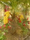 palmier en fleurs