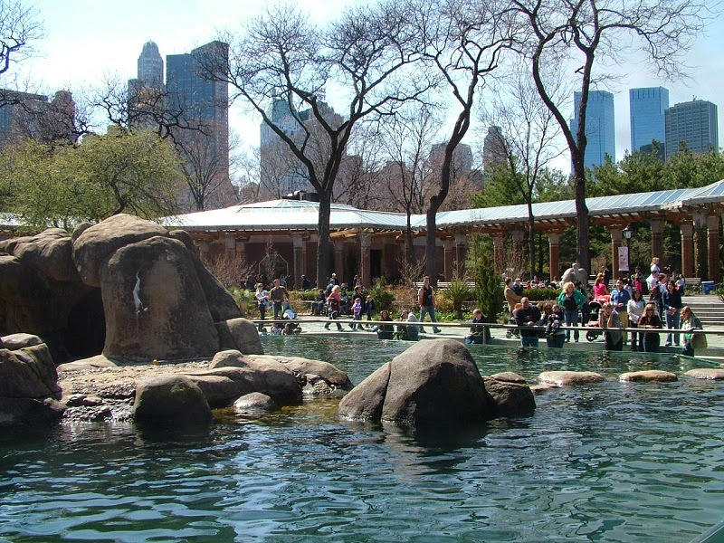 central park zoo animals central park zoo entrance central park zoo new york central park zoo penguins central park zoo wedding central park zoo lion