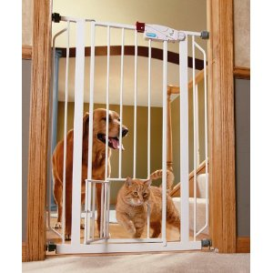 a cat passing through a catfriendly baby gate exclusively cats veterinary hospital