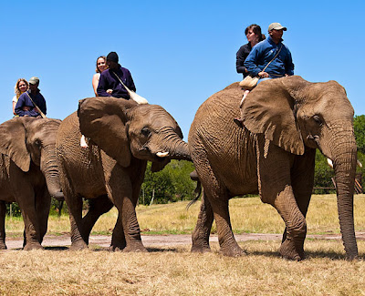 4 Animal%2BRides 10 of the Best Ways to Roam Around South Africa