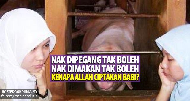 Nak dipegang tak boleh nak dimakan tak boleh, Kenapa Dia ciptakan babi?