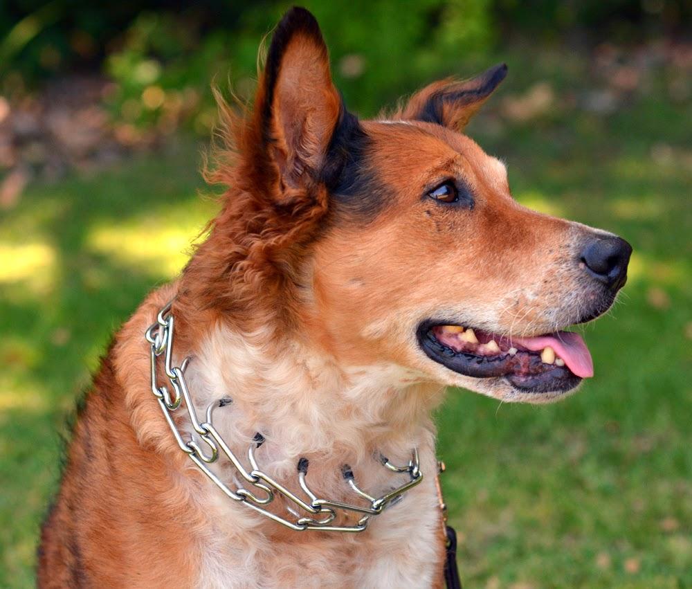 Pet Dog Prong Collar Classic Metal Choke Pinch Dog Chain Collar with Tips