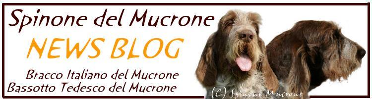 Spinone del Mucrone