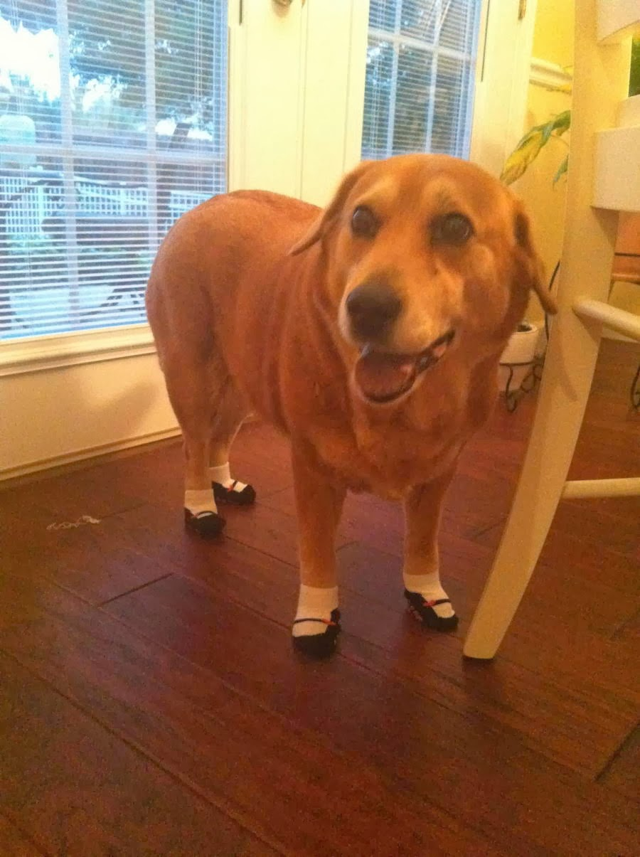 Cute dogs - part 11 (50 pics), dog wears socks with shoes pattern
