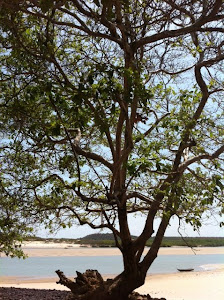 Lagoa Azul de Aldebaran