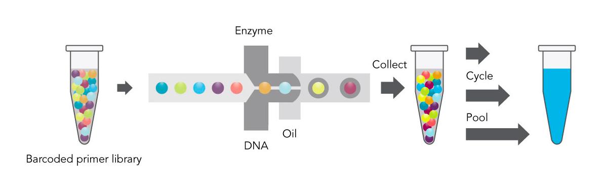 CoreGenomics: 10X Genomics: what's the fuss over phasing