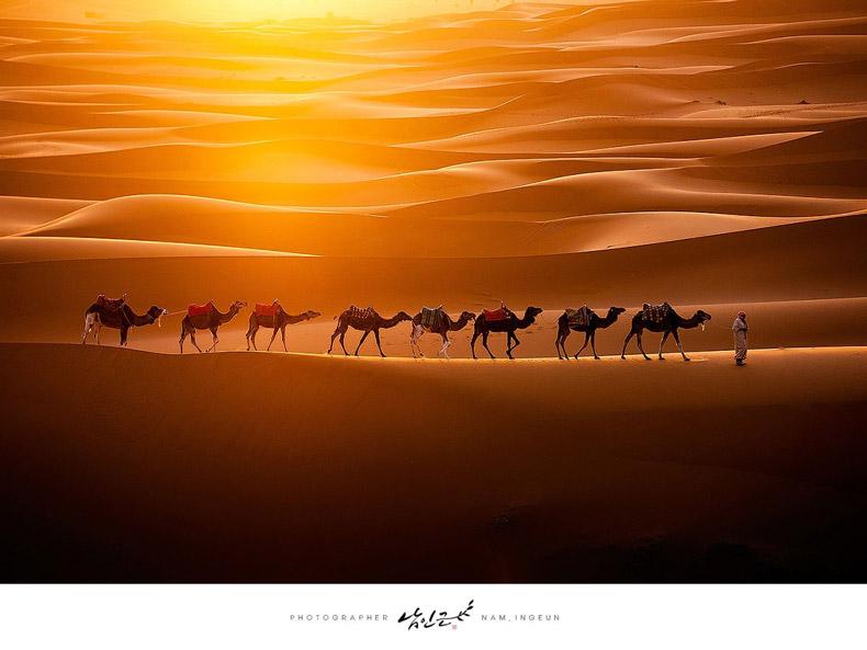 Imagen del día: Camellos cruzando el Sahara