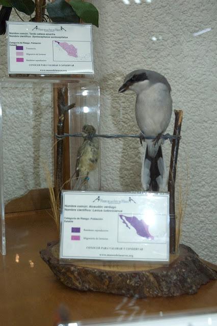 Museo de las Aves de México